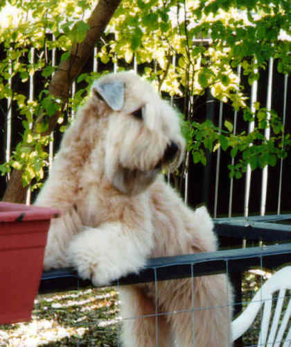 Max looking over fence